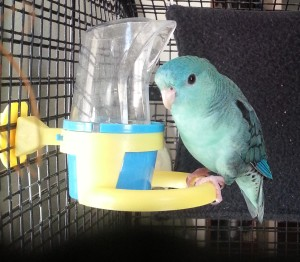 This covered food dish made by JW Pet is a less messy way to feed your linnie.