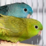 turquoise-sdilutegreen